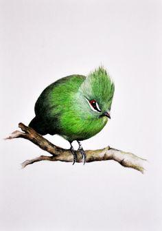 Green Bird Original colored pencil drawing 8 x 11 by PrismaticArt