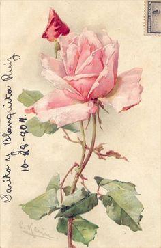 ❥ antique rose