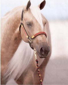 Make It With A Twist - Palomino mare, earner of almost one hundred thousand dollars, never having gone to NRBC.