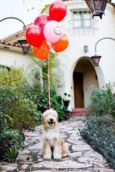 birthday presents, smiling dogs, happy birthdays, pet, happy puppy, puppi, happy dogs, balloon, parti
