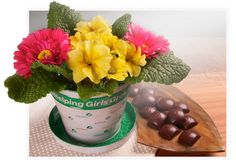 """2013 Collectors Tin, comes with individually wrapped Caramel Treasures, use the """"flower pot"""" later! Purchase from a Girl Scout! Don't know a GSKSMO Girl Scout? Email candy@gsksmo.org before Oct. 7th!"""