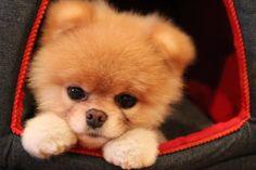 FAVORITE PUPPY :)