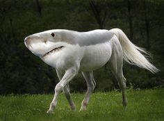 (2014-09) Shark + horse = shorse?