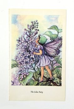 Lilac Fairy,  Picture of Flower Fairy, Cicely Mary Barker illustration, nursery art, fairies on Etsy, £4.50