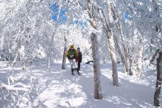 Real-life winter #wonderland on the Peekamoose Trail in the #Catskills. #hiking #adventure #limitless