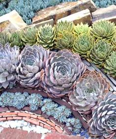 Another way to roll with succulents - Dirt Du Jour