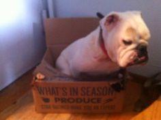 charliebox freshdirect box