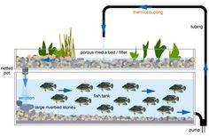aquapon system, food, aquariums, solar panels, farm garden, hydropon garden, pump, gardens, hydroponics