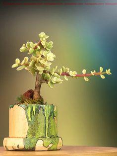 Miniature Jade Bonsai by Bonsai4Life, etsy