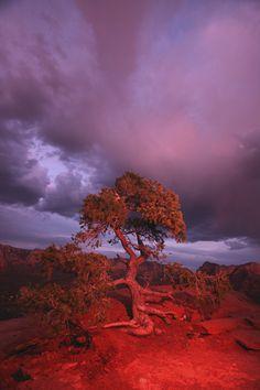 Red tree, Sedona, Az