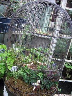 Fairy garden in birdhouse