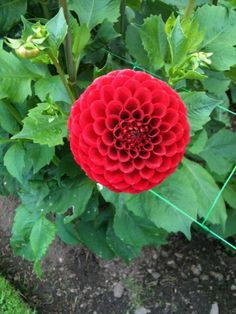 Can you see Fibonacci here? Via @MaryUYSEG