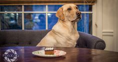 Brody's 5th Birthday | ItsaLabThing