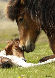 Beautiful Mama Horse & New Baby