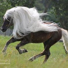 Let the wind flow through your mane!!