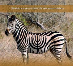Zebra with Menorah Stripes #wild #animals