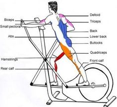 Elliptical -- Using HIIT routine for 30 minutes- 4days/week. (this ...