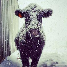 Iowa weather