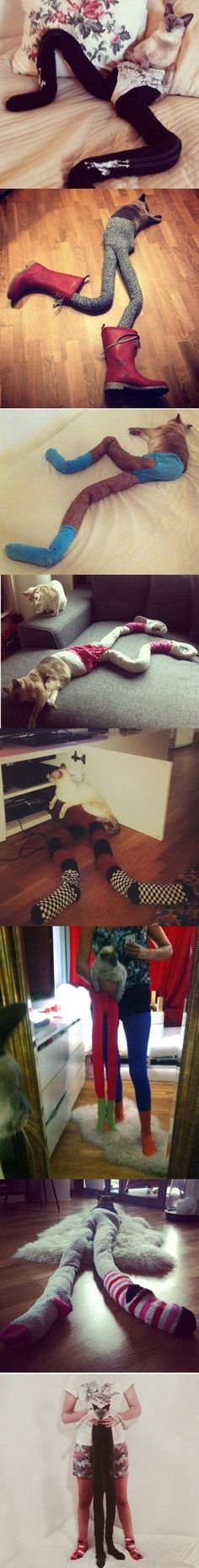 Look at this Cat of the Day: Felines in Tights Are Sew in Right Now Well, I know what I'm doing tonite!