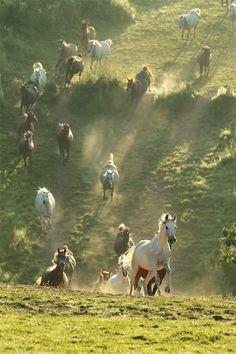 Wild Horses....