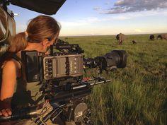 "ARRI Amira and MōVI gimbal in the wild - shooting ""One Planet"" mega series! http://www.motionvfx.com/B3573  #arri #amira #alexa #movi #filmmaking"