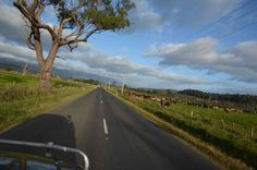 "Late afternoon driving North West Tasmania - the distant tiers with a smidgen of snow, long shadows and contented animals grazing. From A Soul Walkabout In Australia: ""Non avevo capito niente"" (Italian Blog: worth hitting the translate button on site)"