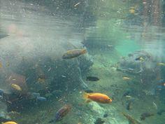Aquarium, Corpus Christi, Texas.