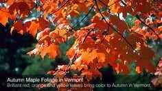 autumn_02