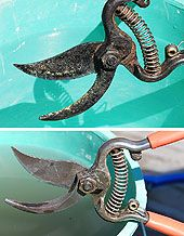 Pruning Shears - Sharpen and Clean