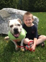 Keilee, donations welcome is an adoptable English Bulldog Dog in Lucknow, ON. Keilee is an eight year old bulldog. She came to us as a retired breeder of six years last october.She was left outside in...