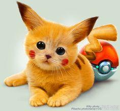 Pikachu cat creative Photo manipulated-