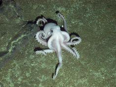 new species discovered in antarctica, 2011.