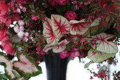 Spring — Emily Thompson Flowers