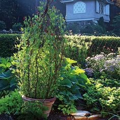 DIY Branch Trellis in a Pot. garden trellis, growing up, trees, old houses, tree branches, topiaries, sweet home, backyard gardens, sweet peas