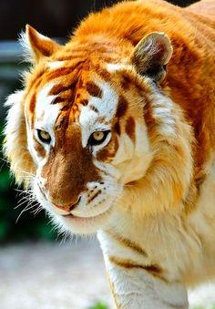 Almost Extinct Animals In The World Animals are almost extinctAlmost Extinct Animals In The World