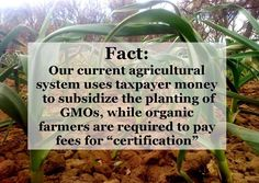 So we help plant GMOs with tax money then pay again to consume the poison.  No wonder organics are more expensive.