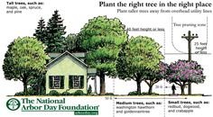 Plan the Right Tree in the Right Place