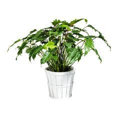 Zet een aantal planten in rieten manden in je slaapkamer & haal de ...