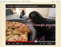 Watch if @DOVEBOOK Member Georgie pigeon's mission for pizza gets accomplished, in the January-February-March 2014 issue! pizza