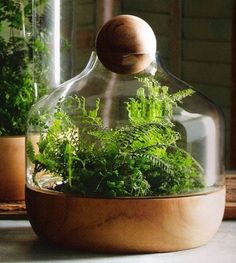 Modern Terrariums: love the simple clean glass and wood structure of this one in particular!