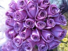 Purple roses signify love at first sight, enchantment, mystery or royalty.