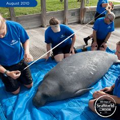 Another successful return! This pretty lady was on her way after a short rehab at the SeaWorld. #365DaysOfRescue