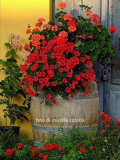 a barrel of flowers