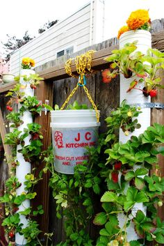 """Vertical Gardening ~ An upcycled industrial-grade bucket can be drilled through the center bottom to serve as an """"upside-down"""" tomato planter, while PVC pipe can be drilled with numerous holes for strawberries or other plants - I like the way they mounted these to the fence posts with pipe strapping and planted bug repelling marigolds in the tops to peek over the fence."""