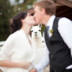 19 Best Animal Photobombs of All Time (some photos taken via TwistedSifter and Smosh)
