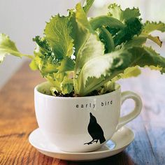 Use an old mug to grow an extra lettuce plant or two! More simple salad-garden containers: http://www.bhg.com/gardening/container/plans-ideas/simple-salad-garden-containers/?socsrc=bhgpin072013saladmug=7