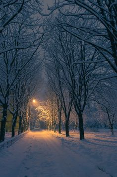 Snowy forest in Kyiv, Ukraine.