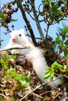 Beautiful albino squirrel....