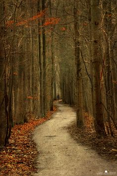 vans, paths, tree, pathway, autumn, forest, place, walk, the road