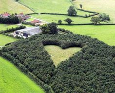 British Farmer Plants Heart-Shaped Meadow in Honor of Late Wife ~ Winston Howes, green thumb and hopeless romantic, planted 6,000 oak trees in the shape of heart in his South Gloucestershire meadow 15 years ago as a tribute to his late wife, Janet. His stunning memorial was his very own secret garden for years until a hot air balloonist happened to cruise over the land and capture a picture of the giant grassy emblem.